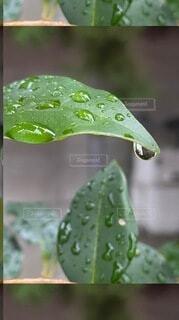 雨の写真・画像素材[4009137]