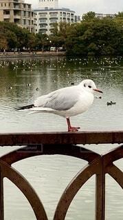 鳥さん。の写真・画像素材[4099119]