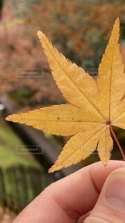 植物を持つ手の写真・画像素材[4147833]