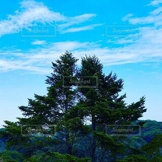 被写体の木と背景にきれいな青空。の写真・画像素材[4155363]