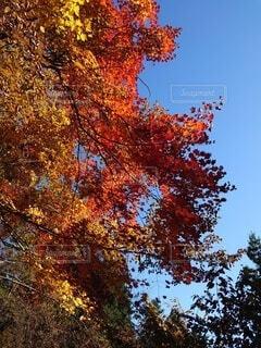 カラフルな色で自然を彩るの写真・画像素材[3899697]