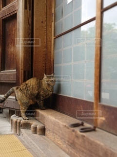 お寺の看板猫ちゃんの写真・画像素材[4339710]