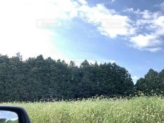 空と木々と野原の写真・画像素材[4815953]