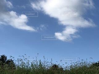 空とネコジャラシの写真・画像素材[4815952]