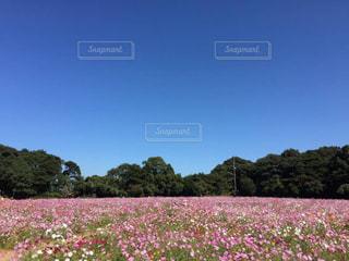 花の写真・画像素材[163972]