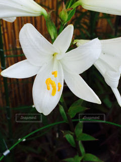 花の写真・画像素材[164126]
