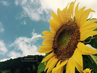 花の写真・画像素材[165591]