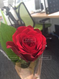 花の写真・画像素材[582008]