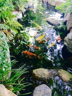魚 - No.608266