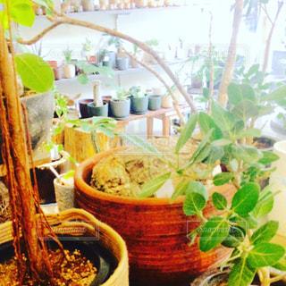 観葉植物 - No.789515