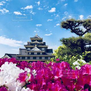 バック グラウンドで姫路城と紫色の花一杯の花瓶の写真・画像素材[1173839]