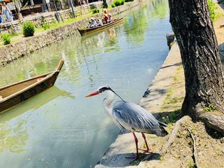 水の体の横に鳥立っての写真・画像素材[1225235]