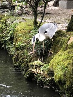 川側に鳥の立っています。の写真・画像素材[1252497]