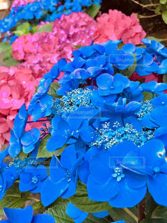 近くの花のアップの写真・画像素材[1271230]
