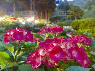 近くの花のアップの写真・画像素材[1274572]