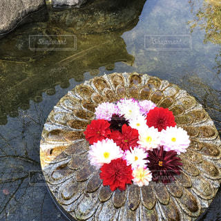 近くの花のアップの写真・画像素材[1650171]