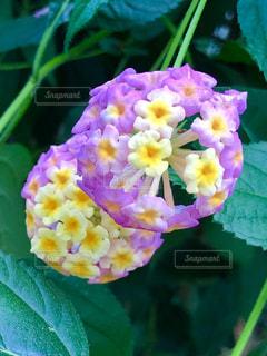 近くの花のアップの写真・画像素材[1674124]