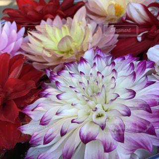 ピンクの花で一杯の花瓶の写真・画像素材[1677035]