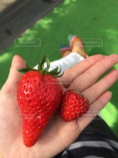 果物を持っている手の写真・画像素材[1722403]