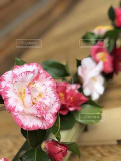 近くの植物にピンクの花のアップの写真・画像素材[1879506]
