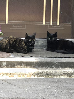 2匹の猫の写真・画像素材[2007879]