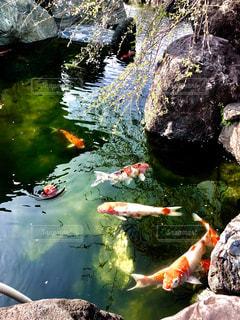 魚の写真・画像素材[2007943]