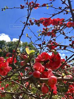 花の写真・画像素材[2008146]