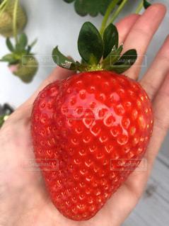 赤い果物を持つ手の写真・画像素材[2929926]
