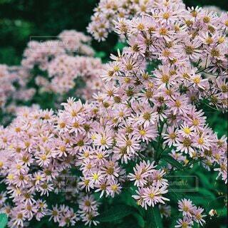 可愛い花の写真・画像素材[3917543]