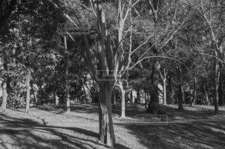 木の写真・画像素材[4077510]