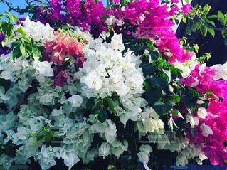 花の写真・画像素材[3930172]