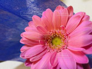 花の写真・画像素材[4074700]