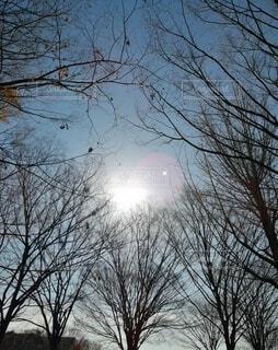 冬の木の写真・画像素材[4036880]
