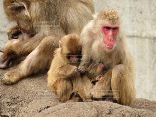 猿のクローズアップの写真・画像素材[3912557]