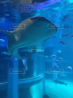 水の下で泳ぐ魚の写真・画像素材[3910894]