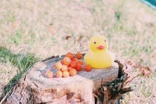 アヒルと秋の木の実の写真・画像素材[3912964]