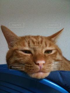 猫の写真・画像素材[164618]