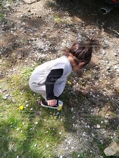 たんぽぽ探しの女の子の写真・画像素材[3917167]
