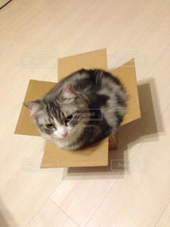 猫の写真・画像素材[164733]