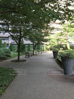 東京フロントコート中庭の写真・画像素材[911911]