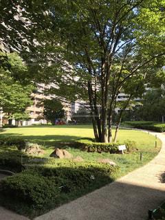 東京フロントコート中庭の写真・画像素材[911912]