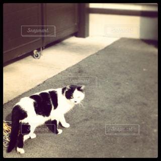 猫の写真・画像素材[164980]
