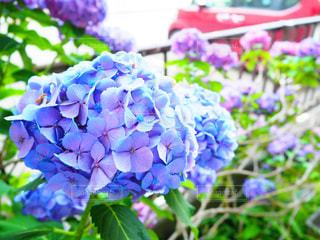 花の写真・画像素材[165131]