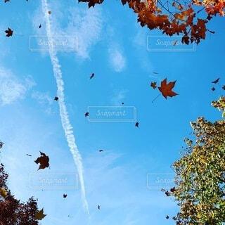 風で落ち葉が舞ってました。の写真・画像素材[3926447]