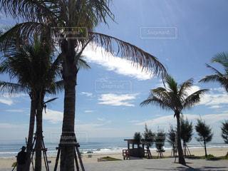 砂浜の写真・画像素材[172742]