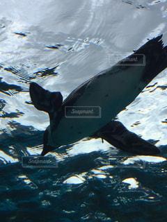 水の中を泳ぐ鳥 - No.723684