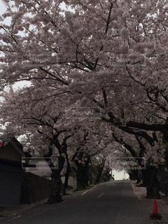 No.165497 風景