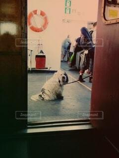 船上で出会った犬の写真・画像素材[3933332]