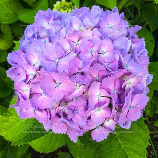 花の写真・画像素材[165721]