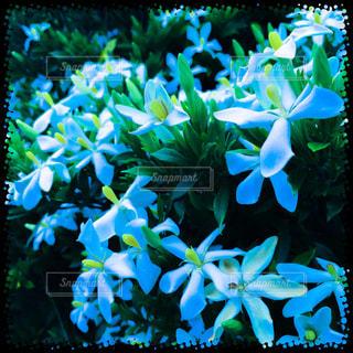 花の写真・画像素材[165971]